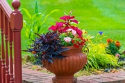 Best Flowers That You Love to Grow at Home