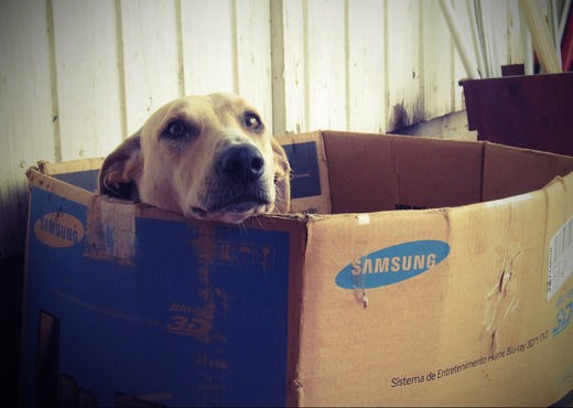 Dog in an old cardboard box