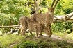 South Africa Safari Holidays
